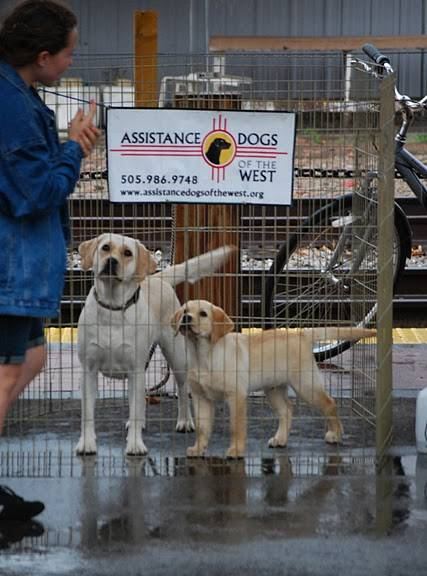 ADW dogs waiting to work at IADW event 2011