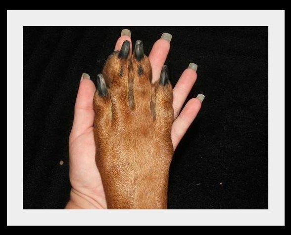 Storm's paw in my hand