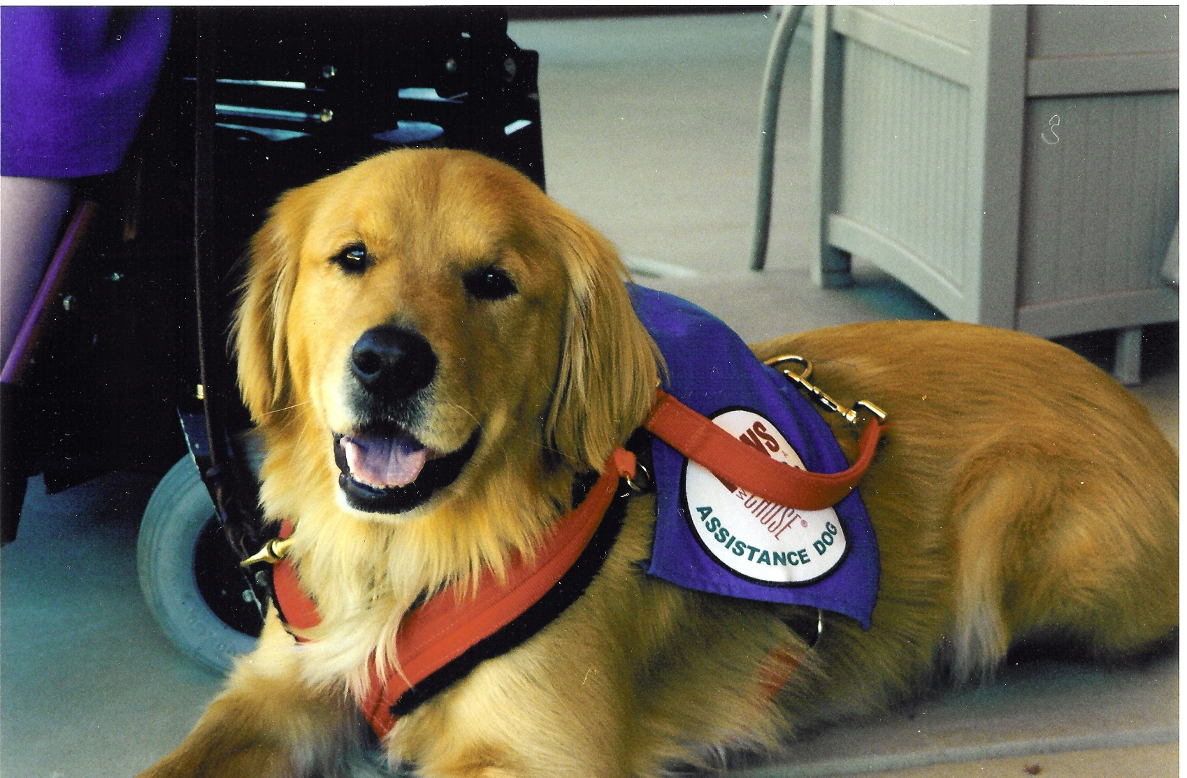 Paws With A Cause Assistance Dog Morgan